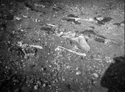 The remains of Armenian victims in a channel near Yerznka